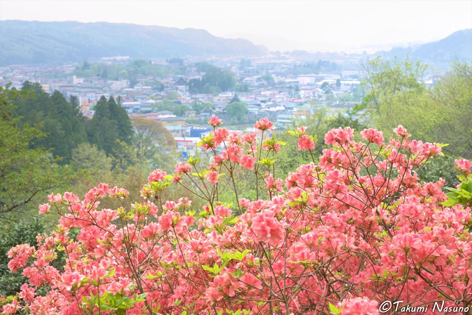 Azalea Blossoms at Akadate Park of Tanagura Town
