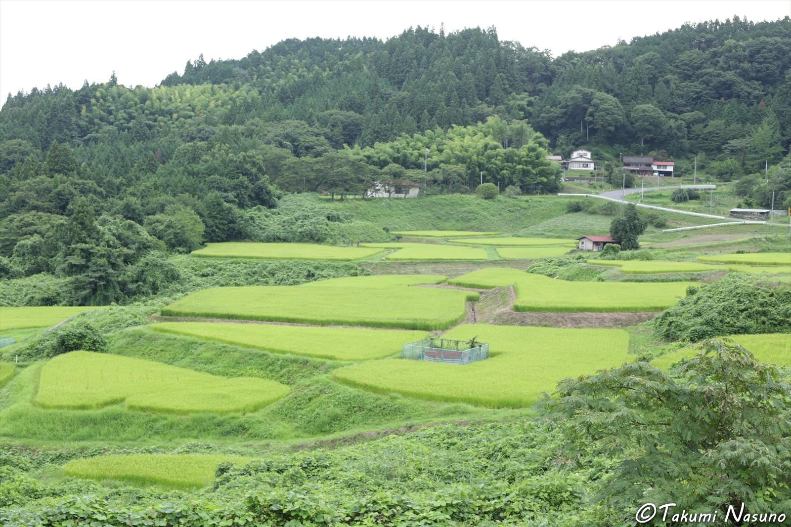 Paddy Fields from Fukuoka District of Tanagura Town