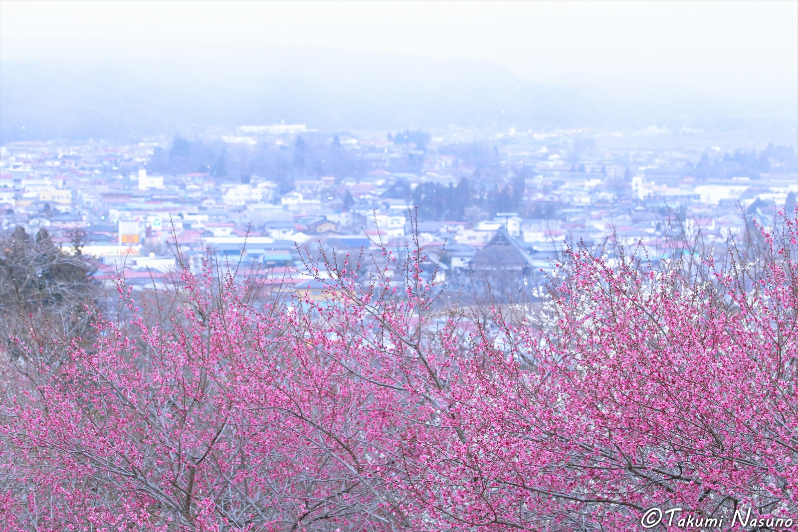 Plum Trees and Snow of Tanagura Town