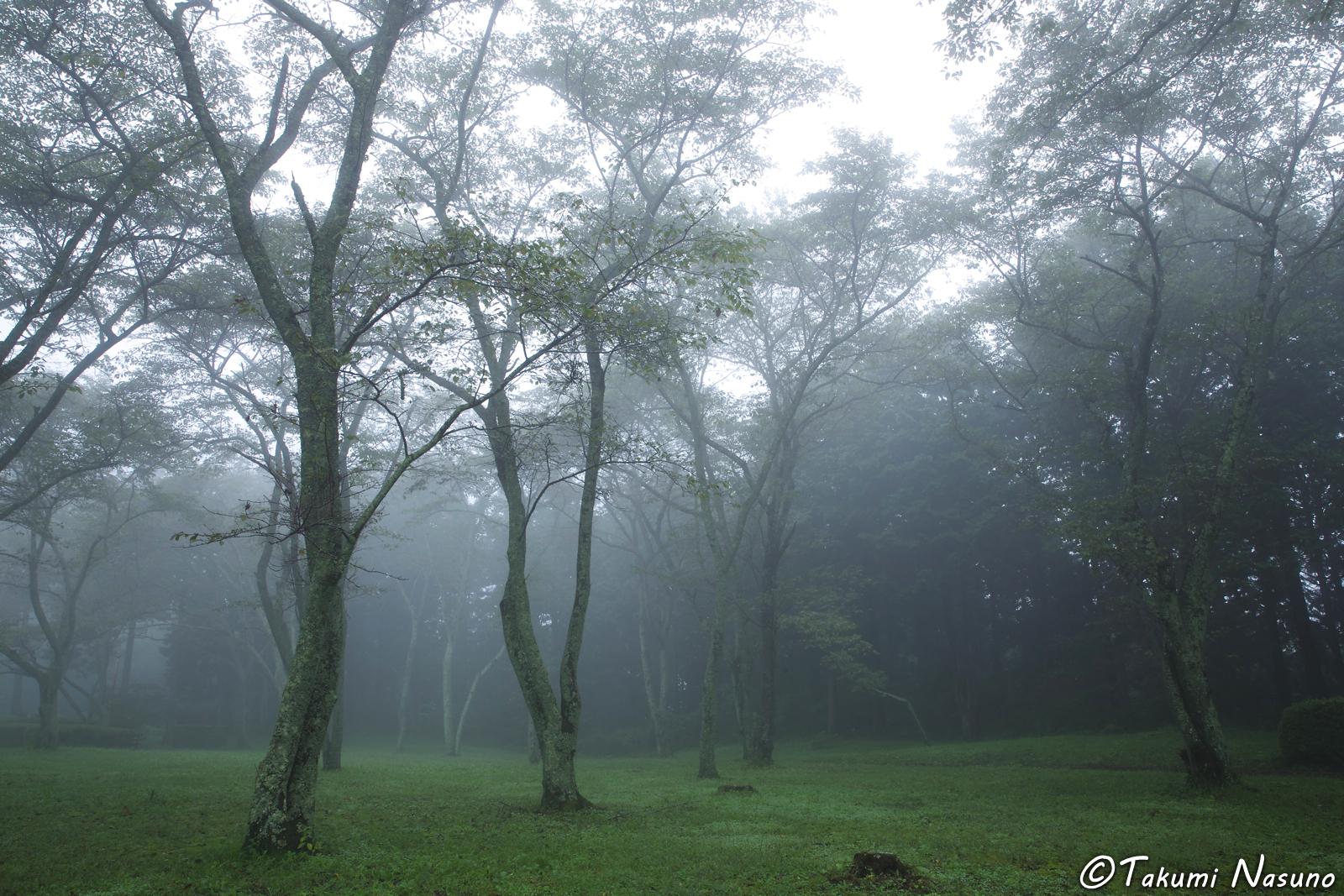 morning-mist-at-akadate-park-of-tanagura-town