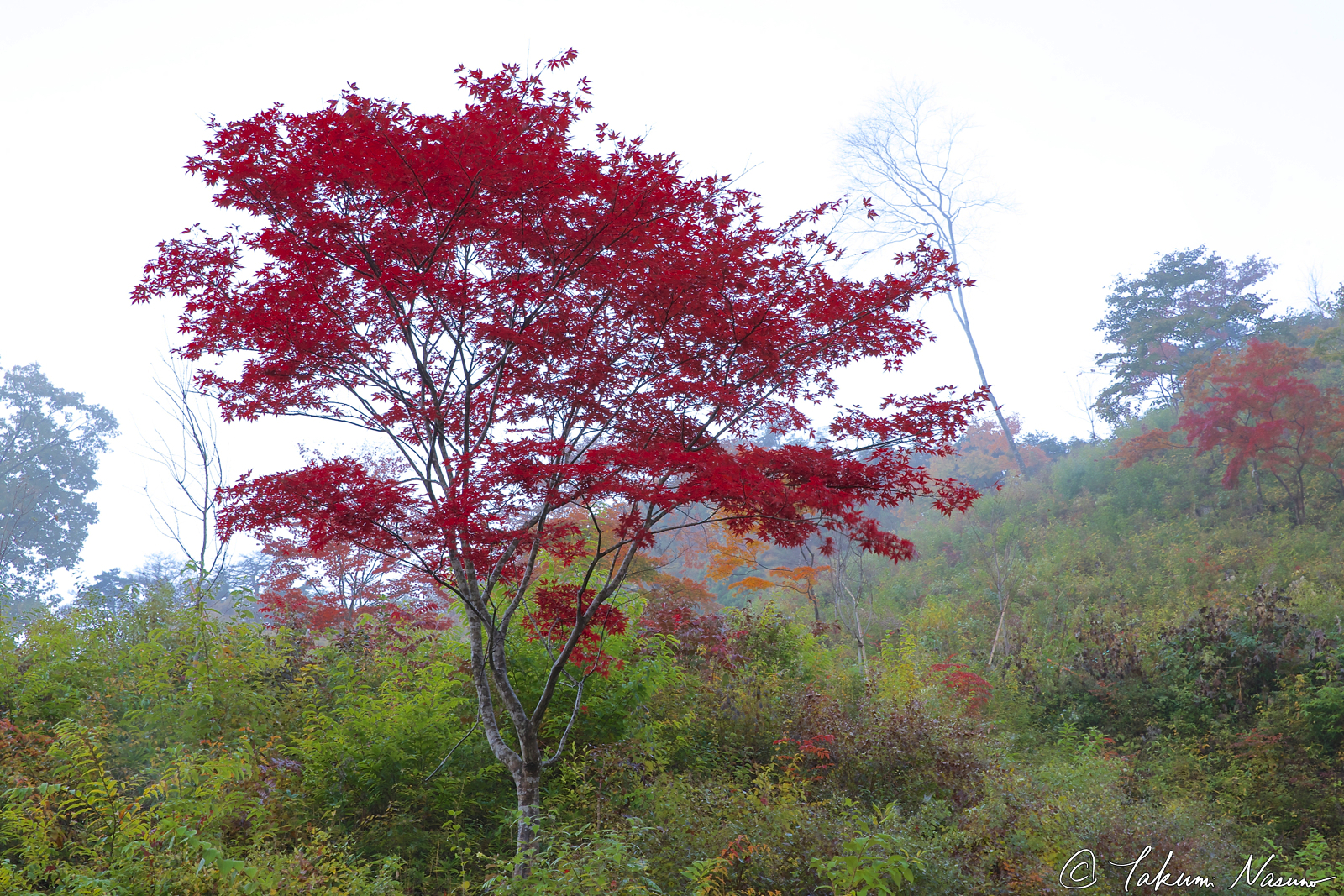autumn-colors-in-the-mist