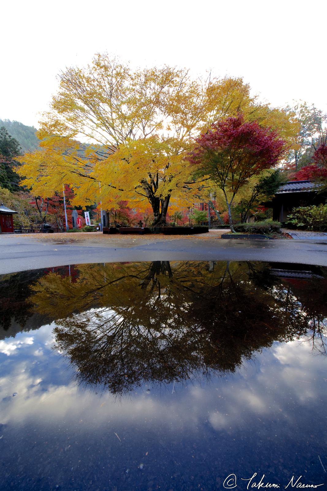 keyaki-reflection-of-yamamoto-fudouson-temple