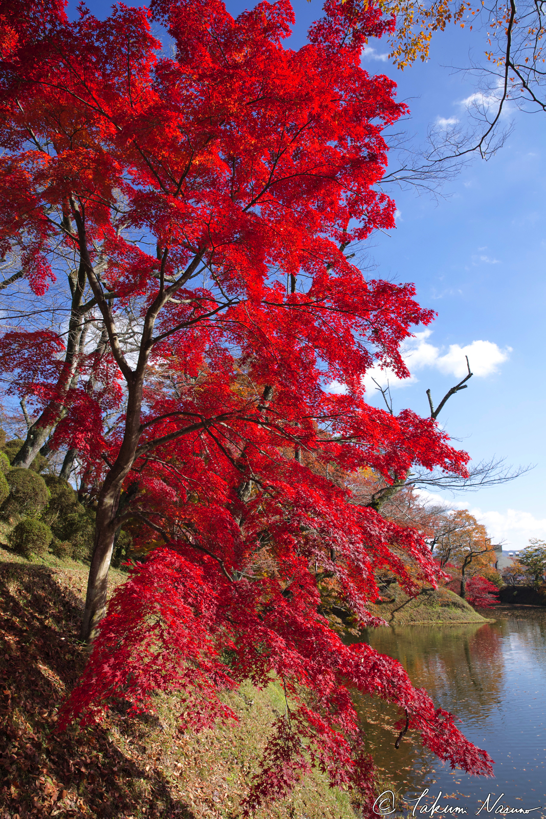 red-autumn-colors-of-site-of-tanagura-castle