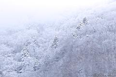 雪景色を見ながら写真の画質について考えてみた