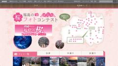 花園のしだれ桜で第6回福島の桜フォトコンテストにエントリーします