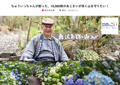 Save the Hydrangea Mountain! - the Crowdfunding of Minamizawa Hydrangea Mountain where One Old Man has grown 10,000 Hydrangea in 47 Years
