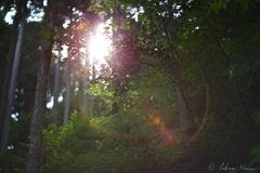How to visit Minamizawa Hydrangea Mountain on Foot