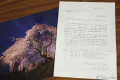 Sad Announcement - Failed at 6th Fukushima Sakura Photo Contest
