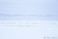 白を思う存分に使って写し取った棚倉町の風景