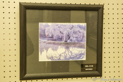 Thanks for using my photo of the Weeping Sakura Tree of Hanazono at Shinshirakawa Station Museum!